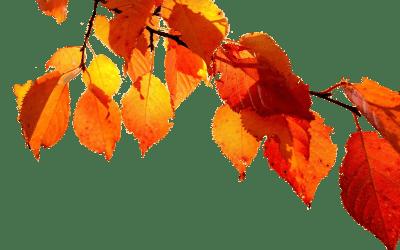 Vi slutar som internetleverantör på fibernätet 1 oktober